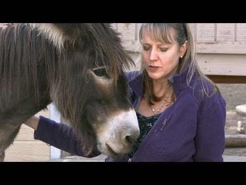 Animal Communicator Sharon Loy Mini Documentary
