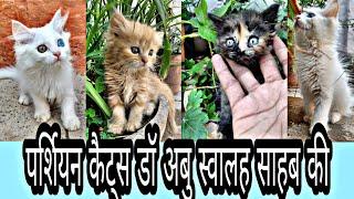 Persian Cats Of Dr Abu Swaleh at Bhopal