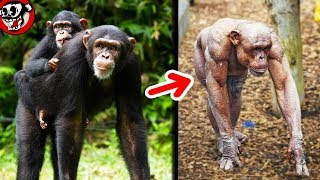 10 ANIMALS YOU SHOULD SEE WITHOUT HAIR 😮
