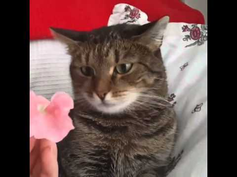Flower crashes cat. By Sophiella cats n' nails via 4GIFs.com