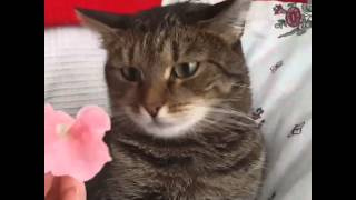 Flower crashes cat. By Sophiella cats n
