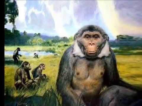 Co Sci Univers n° 13 Australopithecus africanus