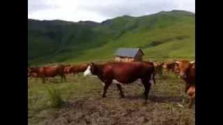 Alpage de Naves - Tarentaise