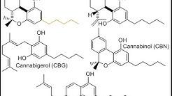 Cannabinoid Profiles - THC, THC-A, THC-V, CBD, CBG, CBN, CBC & Terpenes