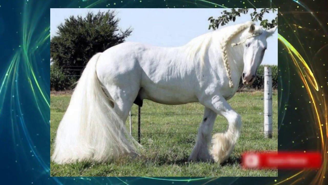 Los caballos mas hermosos del mundo youtube - Fotos de los cuartos mas bonitos del mundo ...