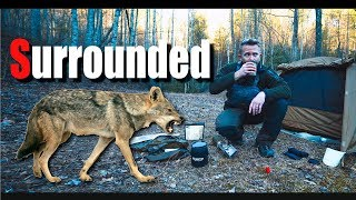 Pathfinding old Forest Roads - Surrounded by Coyotes - Solo Overnight Adventure