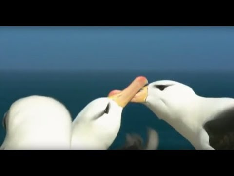 Natural discovery  Documentary film about the life of birds collect