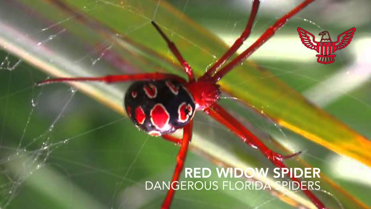 Spider Identification In Florida Youtube