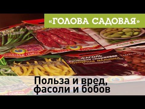 Фасоль красная - калорийность, полезные свойства, польза и