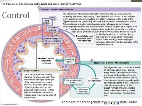 Digestive System - Part 1