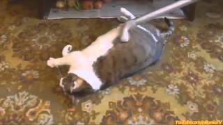 смешные коты и кошки видео - просмотр женщинам и детям рекомендуется!