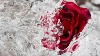 Eisblume - Iceflowers