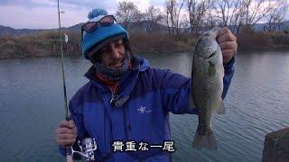釣りニンジャのぶらぶら旅 冬と春のディレンマ。和歌山・紀の川 三寒四温の「三」の巻 (687)