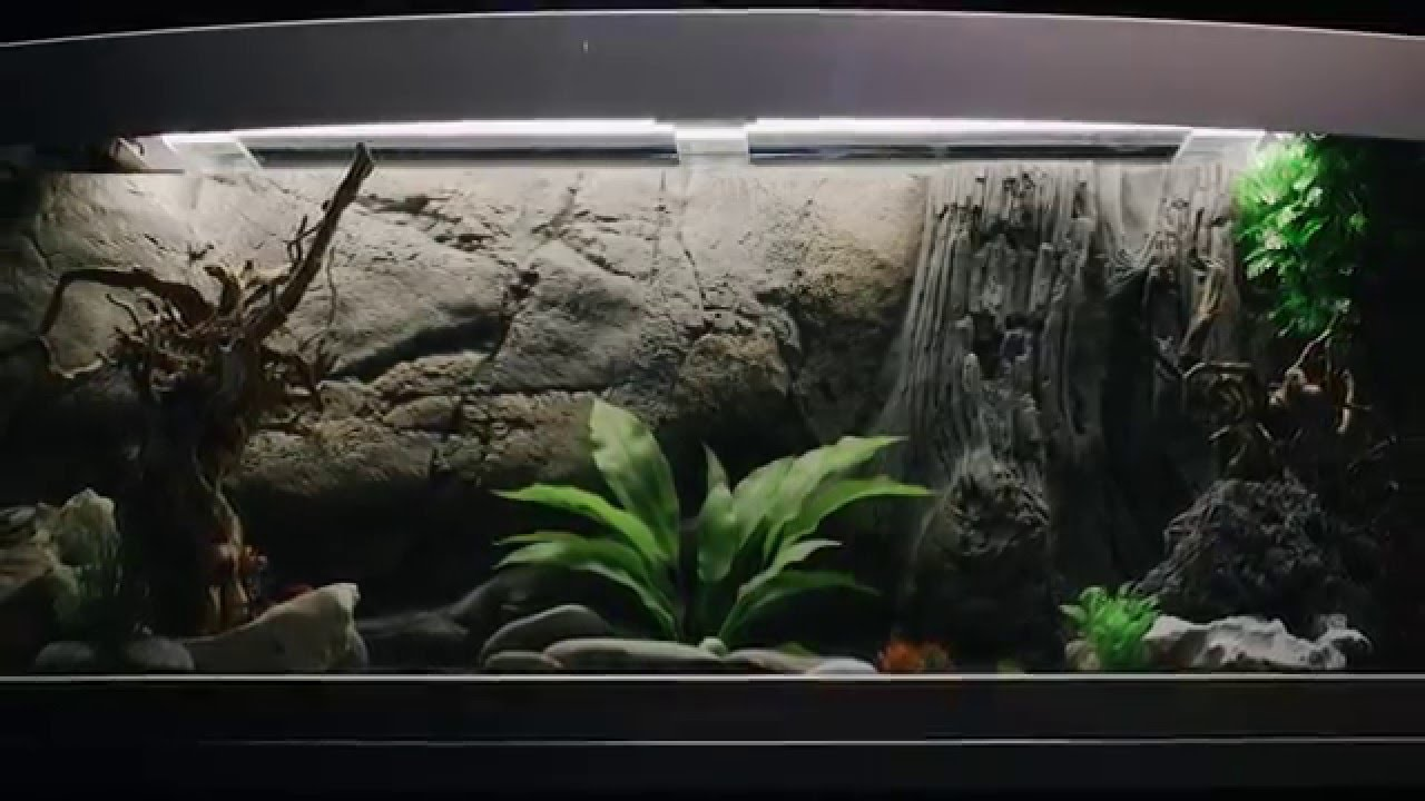 GloFish (Флуоресцентные рыбки) - YouTube
