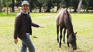 Sie sehen sich nach drei Jahren wieder - Die Reaktion des Pferdes bringt uns zum Nachdenken! thumbnail