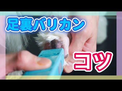 【楽天市場】足裏 バリカン 犬の通販
