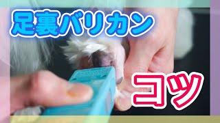 パナソニック 犬用バリカン ペットクラブ ER807PP-A http://goo.gl/wz3G...
