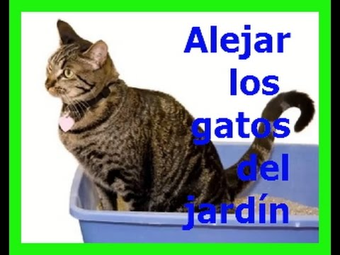 como espantar gatos del jardin youtube