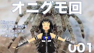 No.001 身近なクモを紹介します thumbnail