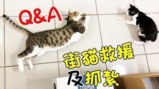 【直播】街貓救援及抓紮Q&A:MiMi醬、黑妞、阿金都是前浪貓~💖ft.黃筱玲(汝汝杉杉與黑妞MiMi醬)