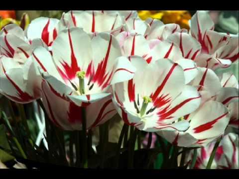 Beautiful flowers slideshow of pretty spring and summer flower beautiful flowers slideshow of pretty spring and summer flower pictures wall photos mightylinksfo