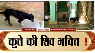 Dog takes round of lord shiv continues from 13 days, watch this video