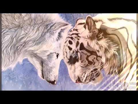 картинки тигр красивые