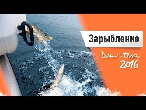 Видеоотчет о зарыблении на Чебоксарском водохранилище