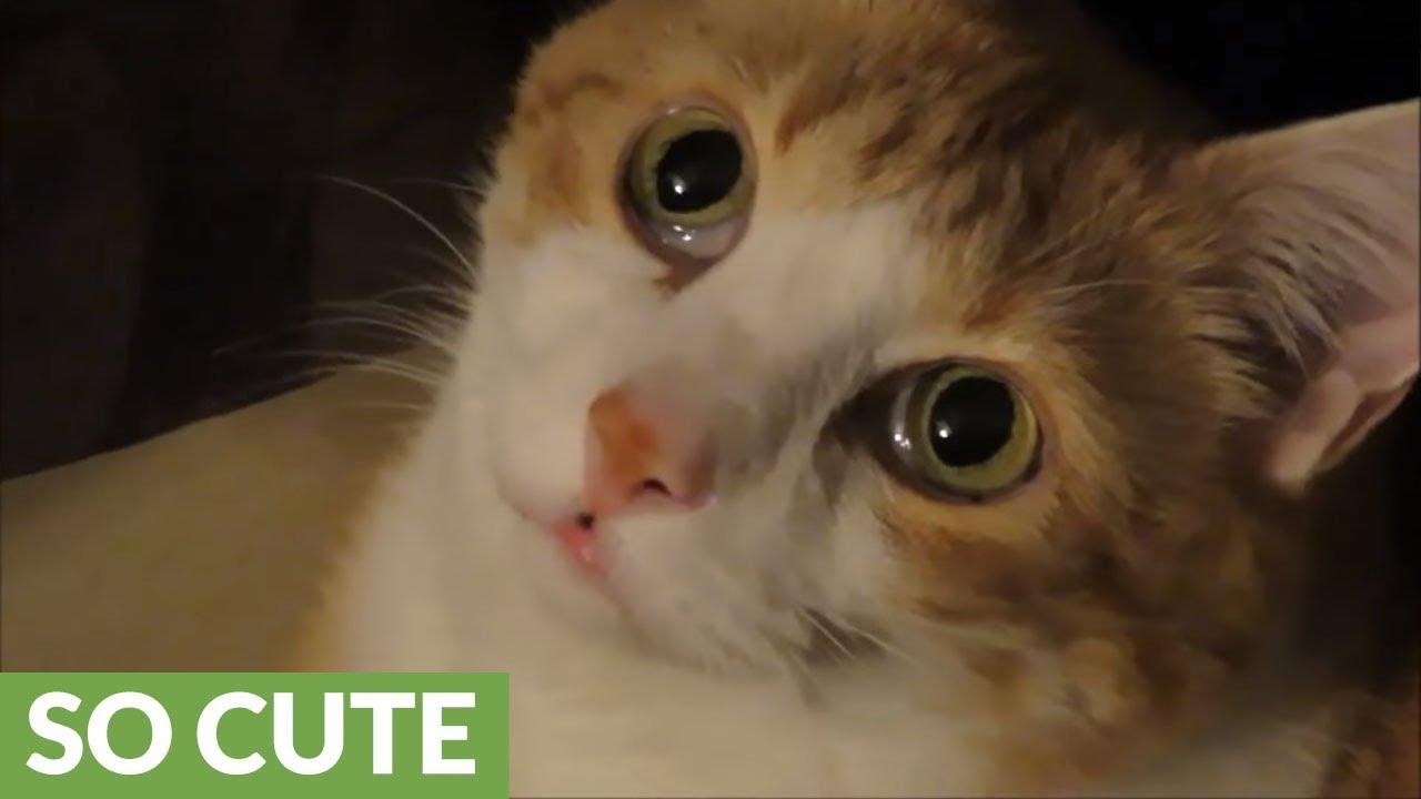 Cute cat face is definitely meme worthy