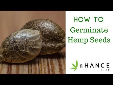 How to germinate hemp seeds