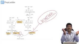 VITAMIN K - Lecture