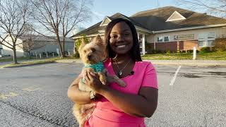 Nia Pope Animal Adoption Looklive -TV3