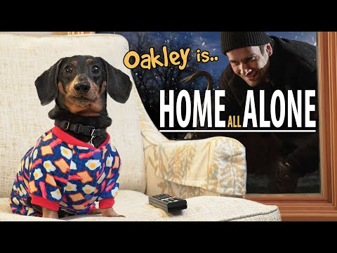 Download Ep#8: Oakley the Dachshund is.. HOME ALONE! 😮