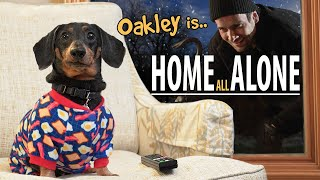 Ep#8: Oakley the Dachshund is.. HOME ALONE!