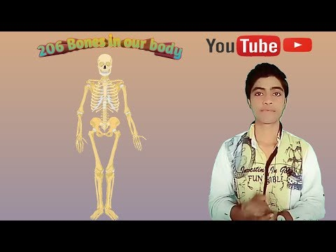 **206 Bones in our body** ( Appendicular Skeleton/Axial Skeleton)