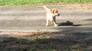 Ruff World Animal Rescue - Pups For Adoption March 2015