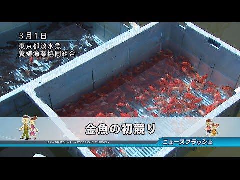 金魚の初競り
