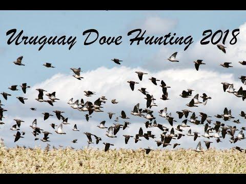 Uruguay Dove Hunting La Gaviota Lodge March 2018