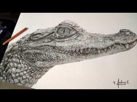 dibujando un cocodrilo