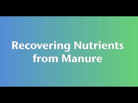 Recovering Nutrients From Manure
