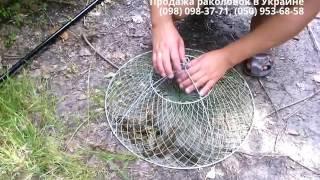 Раки в раколовке. Ловля раков на раколовки. Испытание бюджетной приманки. fishing, catching crabs