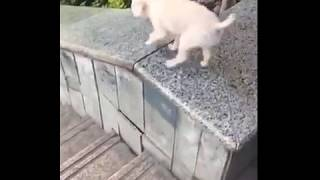 Baixar Escorregador Canino