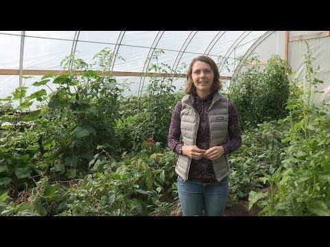 High Tunnels – In the Alaska Garden with Heidi Rader