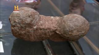 EL PRECIO DE LA HISTORIA - ¿Huevos de dinosaurio?