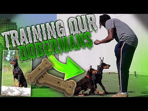 TRYING TO TRAIN OUR DOBERMANS! *DIDN'T GO AS PLANNED*