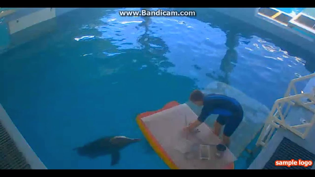 Dolphin Tale 2 Webcam# YOU GET TO SEE WINTER! - YouTube