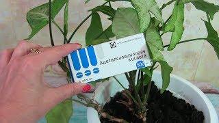 видео Купить цветущие горшечные растения через интернет