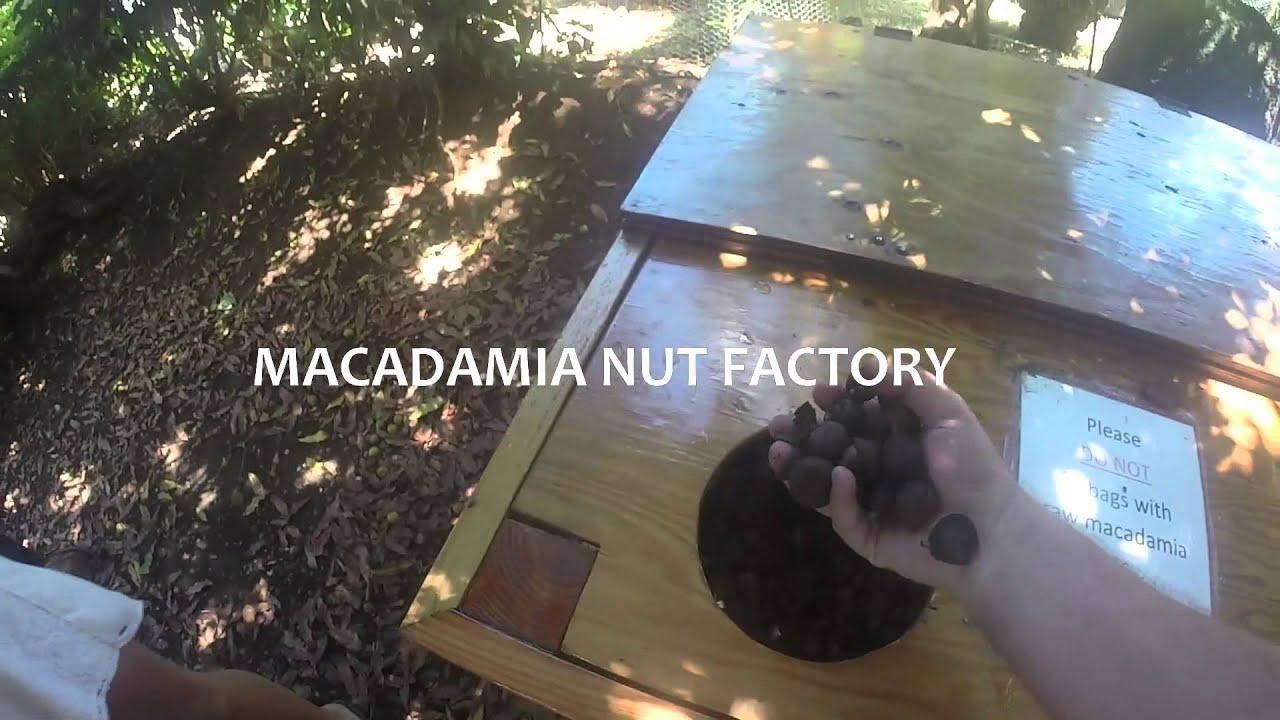 Macadamia Nut Shop Oahu GoGo Hawaii