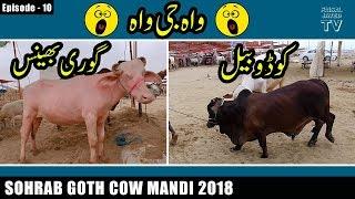 COW MANDI SOHRAB GOTH 2018 KARACHI | Episode – 10 | Unique Animals | Video in URDU/HINDI