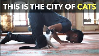 This Is The City Of Cats